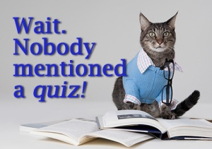 Cat No Quiz