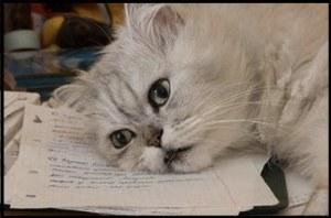 cat-paperwork